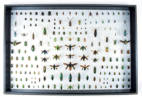 godofinsects.com :: Framed Insects & Collections